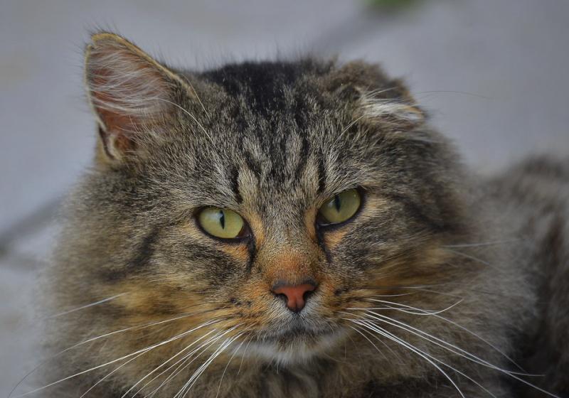 Les chats. 2015-132