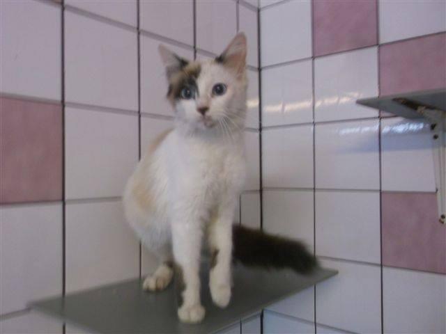 Photos des chats sauvés, avant/après - Page 8 10169210