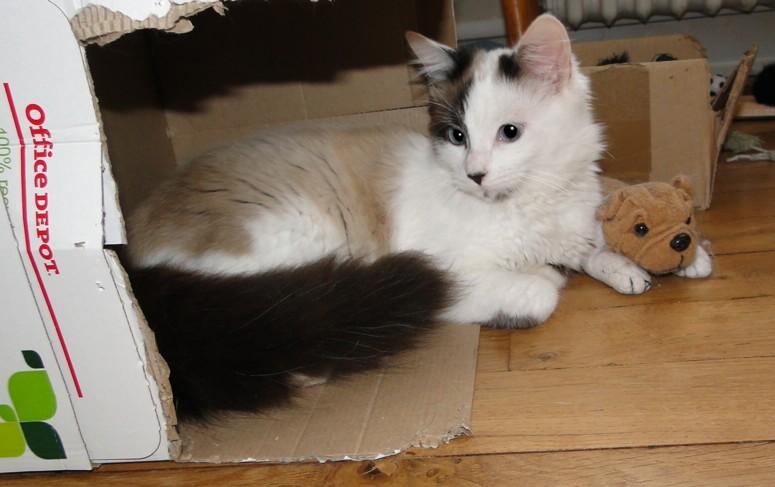 Photos des chats sauvés, avant/après - Page 8 Copie_10
