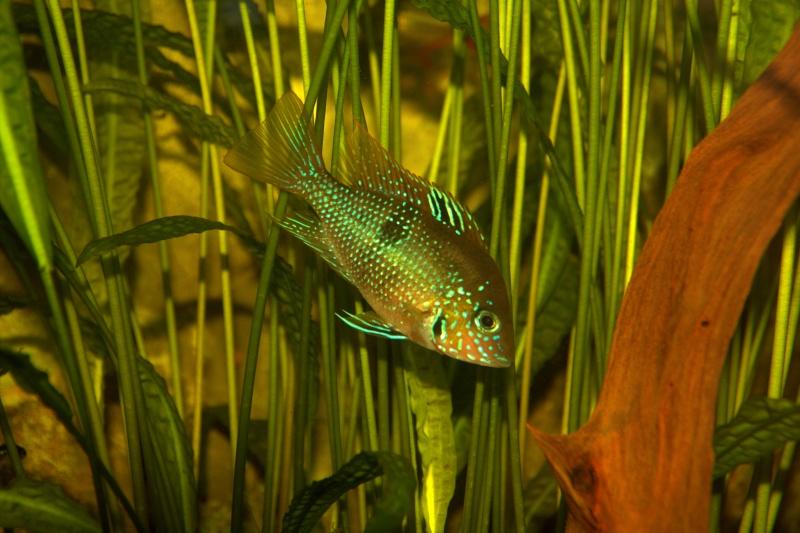 Aqua Club Du Pays des Lacs de LOUPERSHOUSE : Le local Img_0811