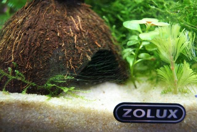 Problème algues verte Dsc00915