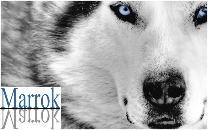 Bear's Wolves Like To Stay HERE (Because Where Else Would They Go?) Marrok11