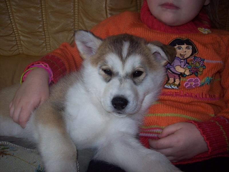 Nos loups grandissent, postez nous vos photos - Page 5 100_3513