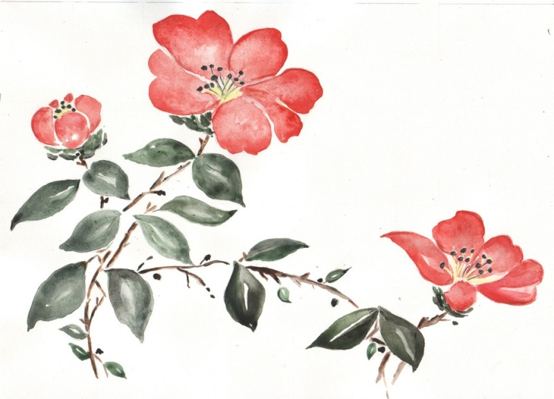 Camelia Made In China