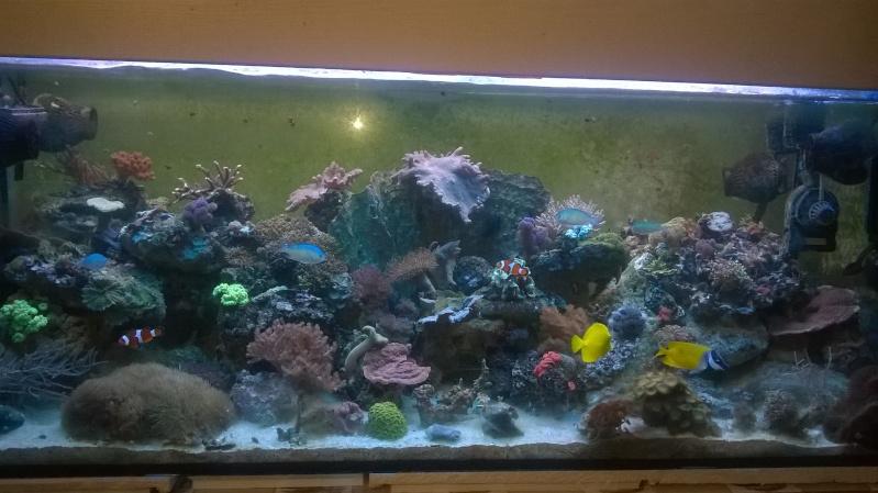 488 litres eau de mer - Page 4 Wp_20111
