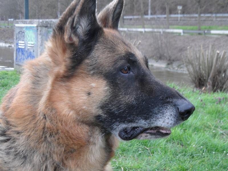 Le vieux chien (chien vieillissant/âgé): conseils? - Page 3 Sam_5511