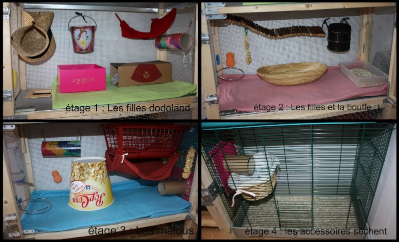 Photos de vos cages - Page 3 Atages10