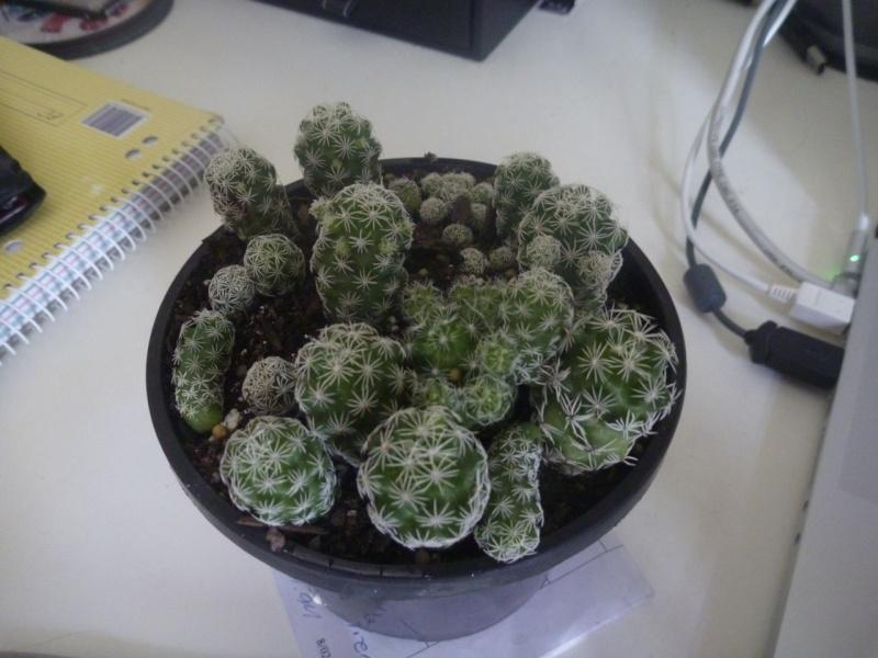 Cacti ID please P1000310