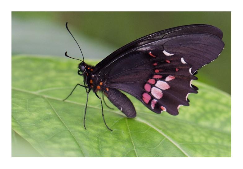 Sortie au Jardin des Papillons de Grevenmacher le 03 Avril 2011 : Les photos 03042015