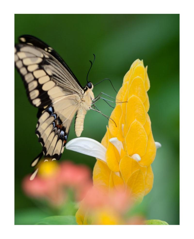 Sortie au Jardin des Papillons de Grevenmacher le 03 Avril 2011 : Les photos 03042017
