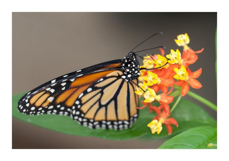 Sortie au Jardin des Papillons de Grevenmacher le 03 Avril 2011 : Les photos 03042018