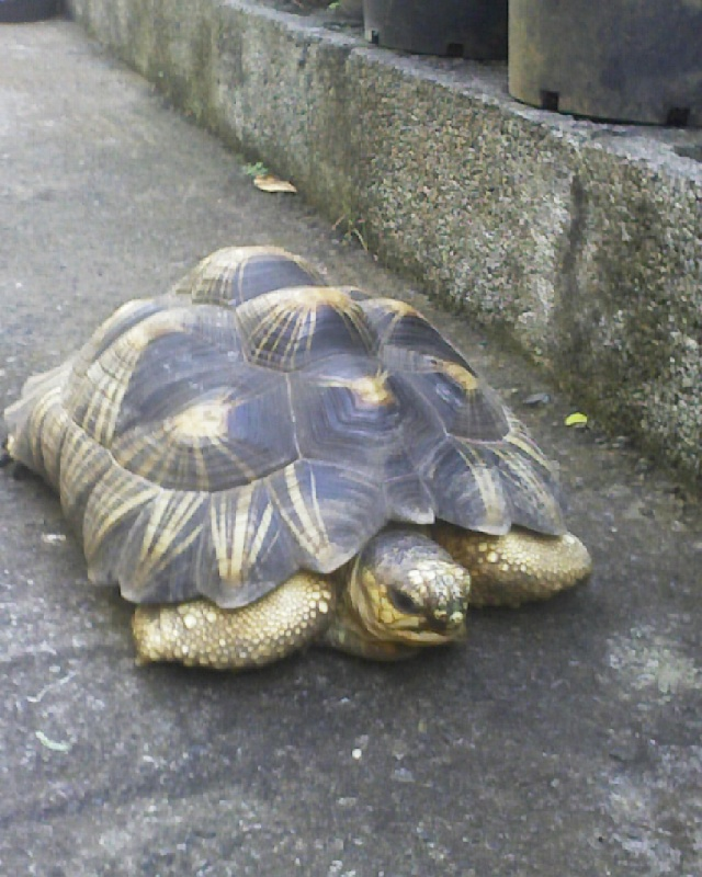 tortue malade depuis 32 jours - Page 3 Mati_a11