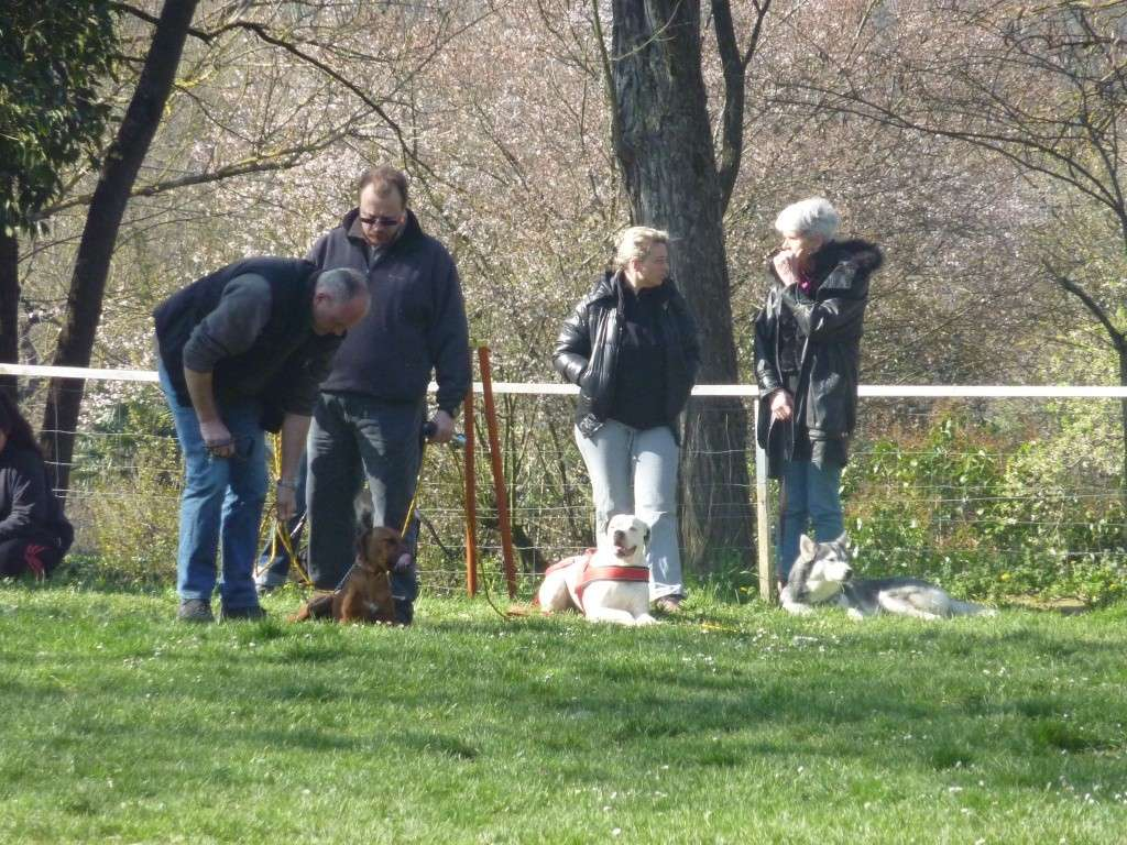 photos du dimanche 20 mars 2011 P1010713