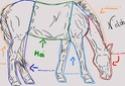 colo à plusieurs cheval de sport Colabo11