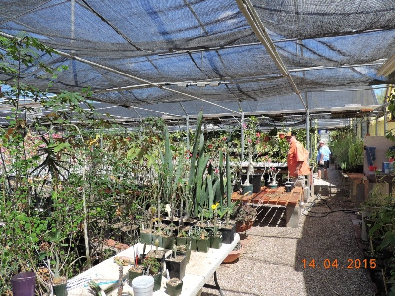 Cacti and Sukkulent in Köln, every day new flowers in the greenhouse Part 135 9090710
