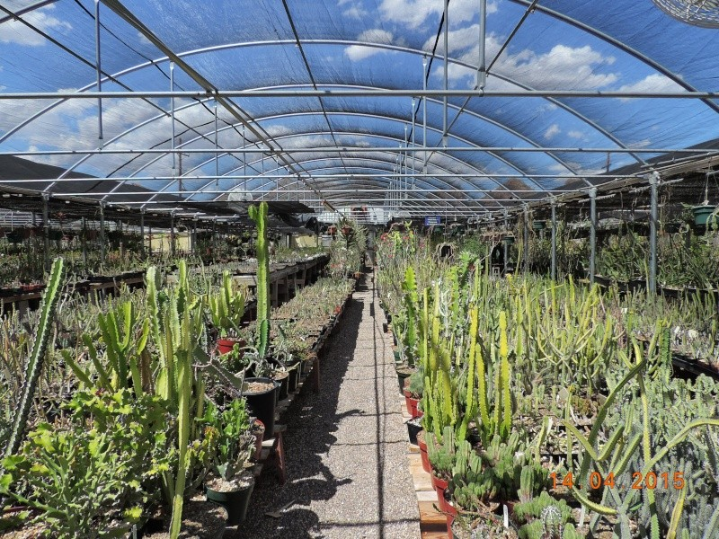 Cacti and Sukkulent in Köln, every day new flowers in the greenhouse Part 135 9091110