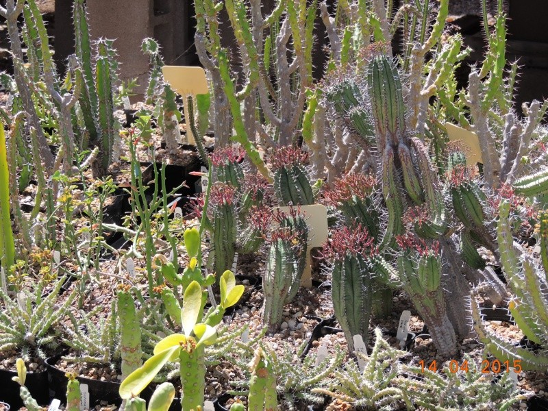 Cacti and Sukkulent in Köln, every day new flowers in the greenhouse Part 135 9092110