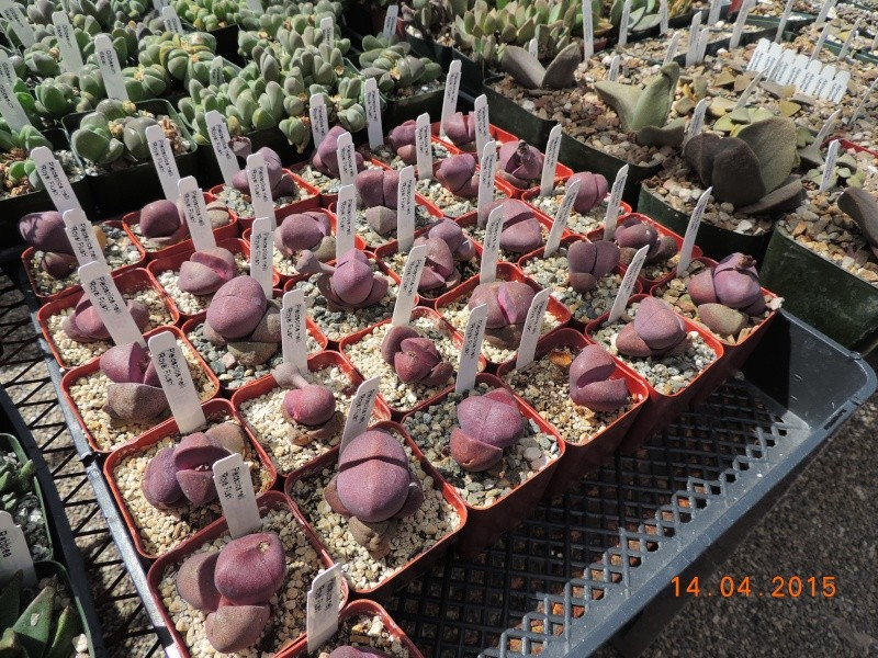 Cacti and Sukkulent in Köln, every day new flowers in the greenhouse Part 135 9094010