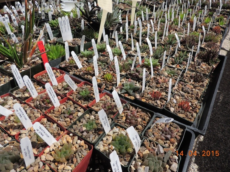 Cacti and Sukkulent in Köln, every day new flowers in the greenhouse Part 135 9094510