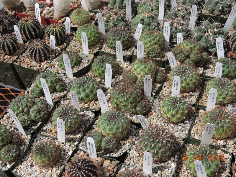 Cacti and Sukkulent in Köln, every day new flowers in the greenhouse Part 135 9094910