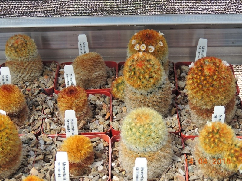 Cacti and Sukkulent in Köln, every day new flowers in the greenhouse Part 135 9095210