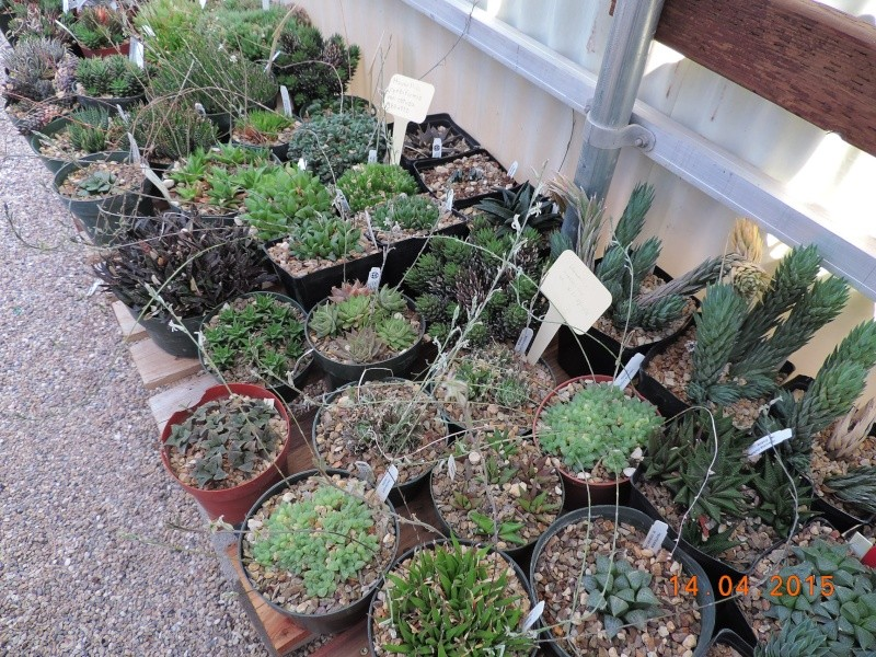 Cacti and Sukkulent in Köln, every day new flowers in the greenhouse Part 135 9095810