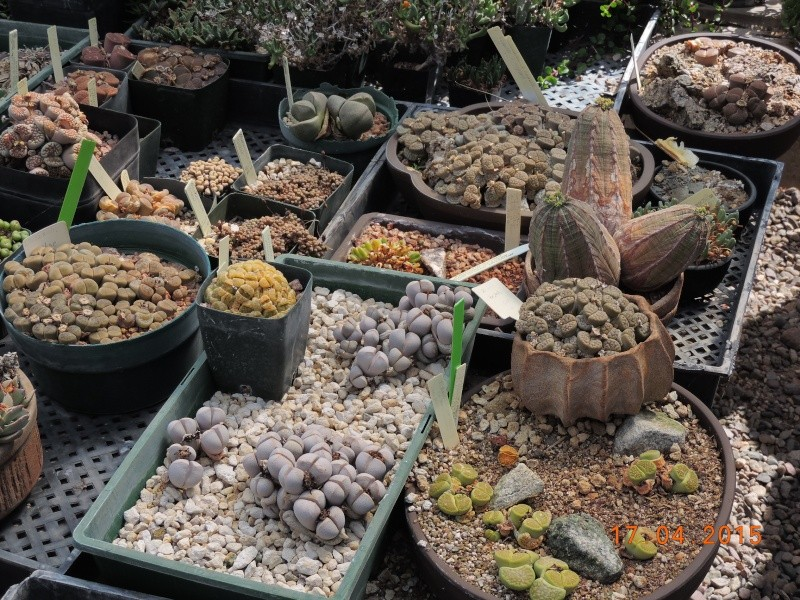 Cacti and Sukkulent in Köln, every day new flowers in the greenhouse Part 135 9151910