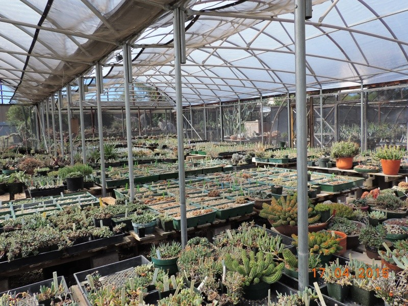 Cacti and Sukkulent in Köln, every day new flowers in the greenhouse Part 135 9153210