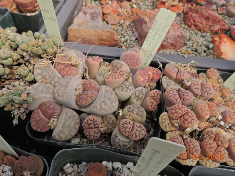Cacti and Sukkulent in Köln, every day new flowers in the greenhouse Part 135 9153610