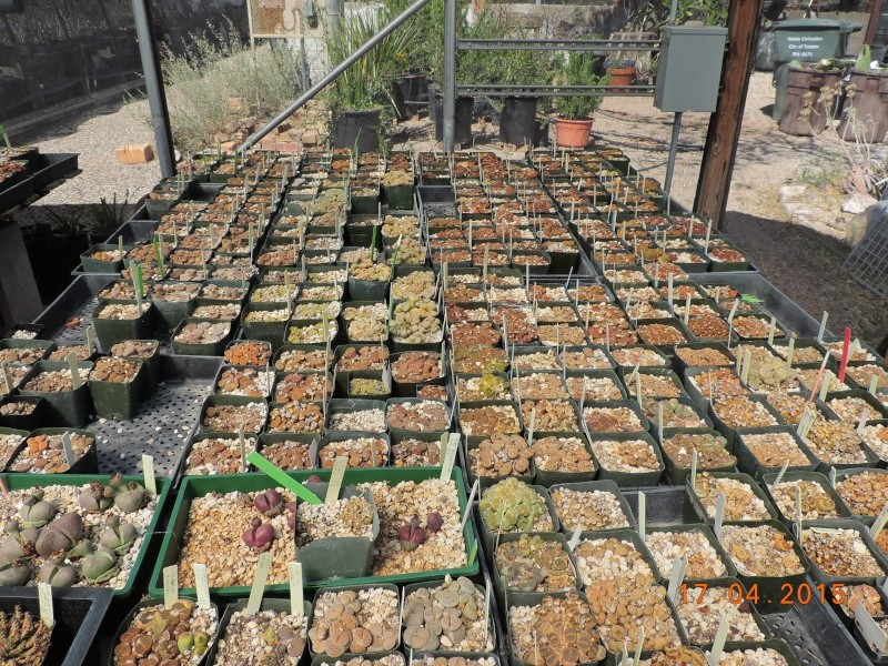 Cacti and Sukkulent in Köln, every day new flowers in the greenhouse Part 135 9154110