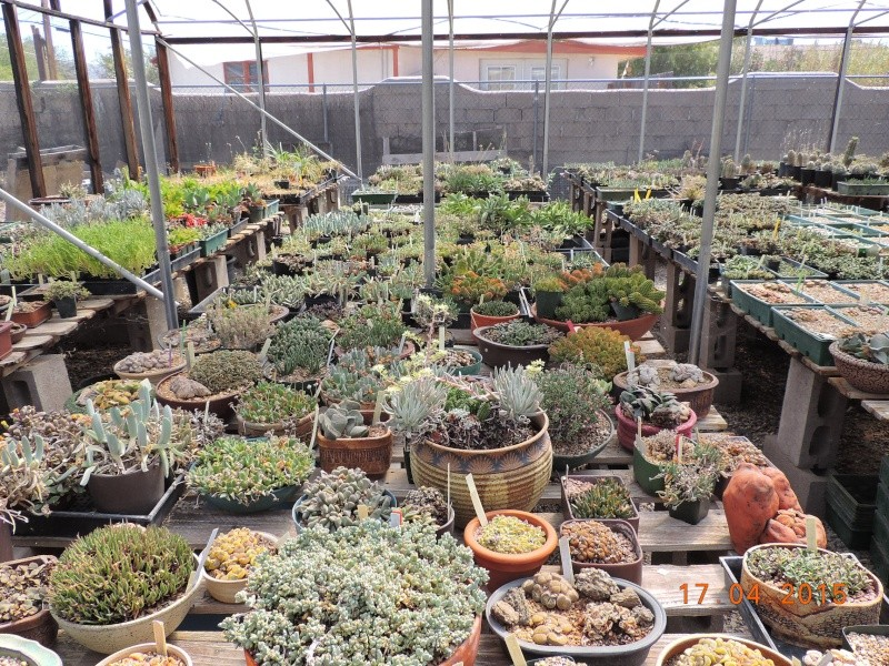 Cacti and Sukkulent in Köln, every day new flowers in the greenhouse Part 135 9154610