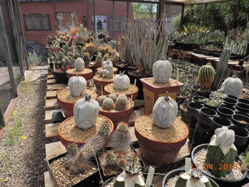 Cacti and Sukkulent in Köln, every day new flowers in the greenhouse Part 135 9155410
