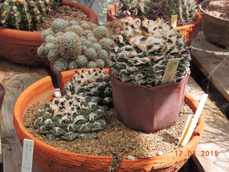 Cacti and Sukkulent in Köln, every day new flowers in the greenhouse Part 135 9156210