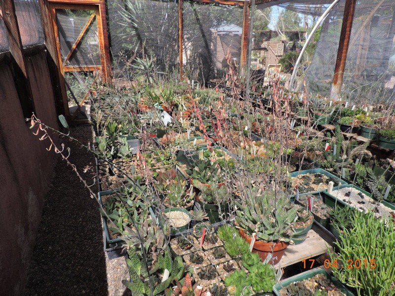 Cacti and Sukkulent in Köln, every day new flowers in the greenhouse Part 135 9157610