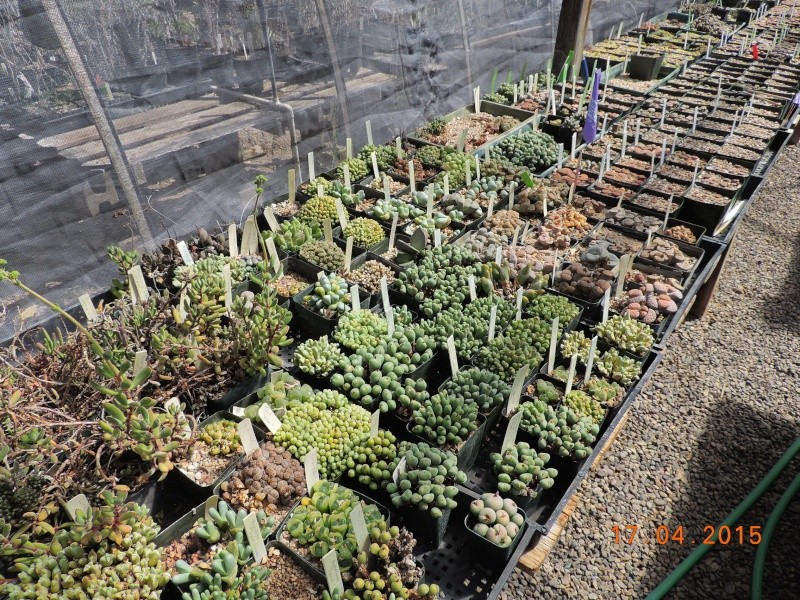 Cacti and Sukkulent in Köln, every day new flowers in the greenhouse Part 135 9158110