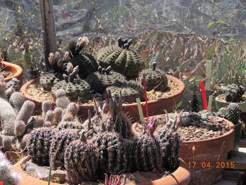 Cacti and Sukkulent in Köln, every day new flowers in the greenhouse Part 135 9161410