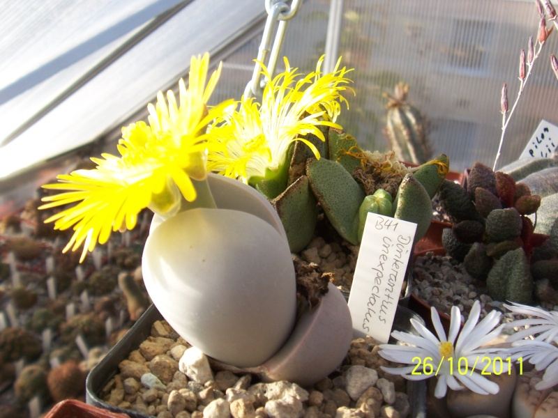 Cacti and Sukkulent in Köln, every day new flowers in the greenhouse Part 136 Bild_100