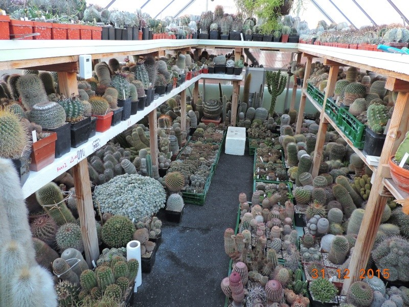 Cacti and Sukkulent in Köln, every day new flowers in the greenhouse Part 135 Bild_119