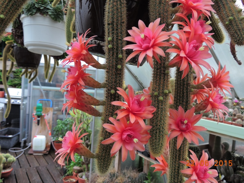 Cacti and Sukkulent in Köln, every day new flowers in the greenhouse Part 136 Bild_123