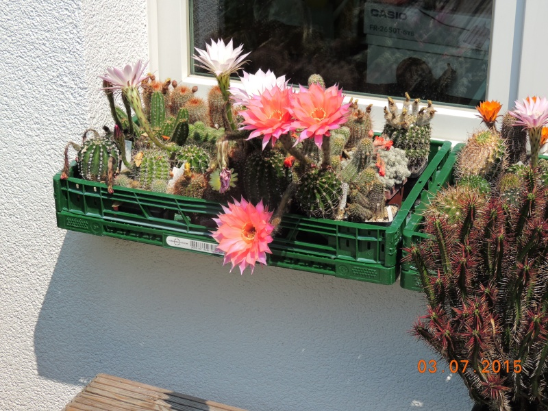 Cacti and Sukkulent in Köln, every day new flowers in the greenhouse Part 136 Bild_124