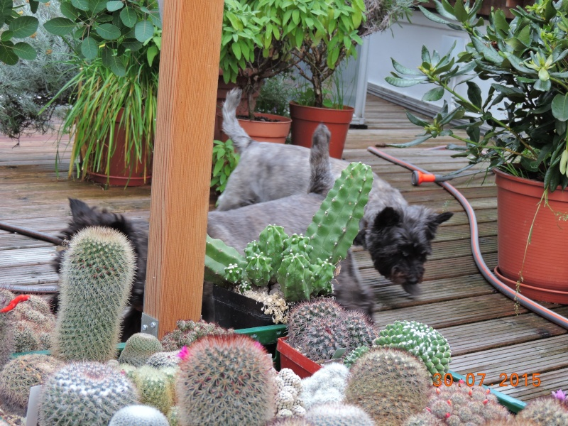 Cacti and Sukkulent in Köln, every day new flowers in the greenhouse Part 136 Bild_126