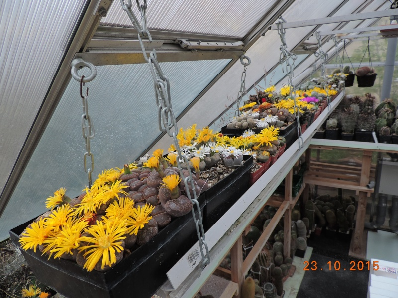 Cacti and Sukkulent in Köln, every day new flowers in the greenhouse Part 136 Bild_140