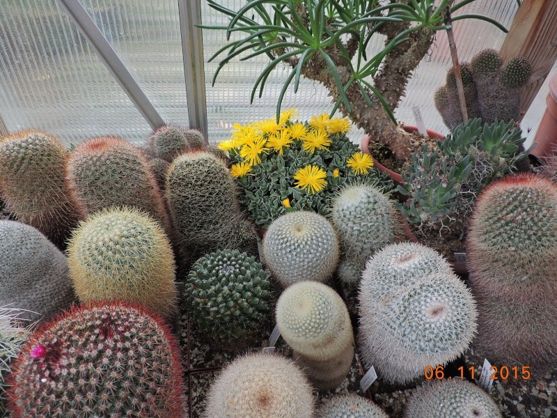 Cacti and Sukkulent in Köln, every day new flowers in the greenhouse Part 136 Bild_143