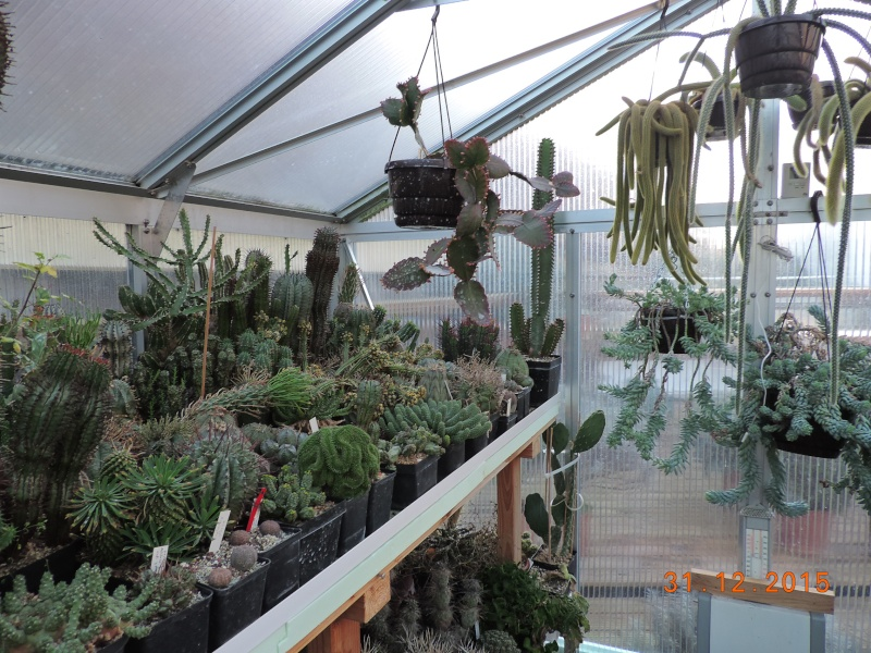 Cacti and Sukkulent in Köln, every day new flowers in the greenhouse Part 136 Bild_152