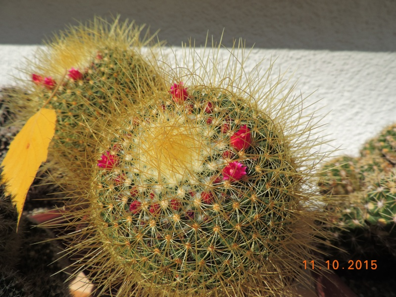 Cacti and Sukkulent in Köln, every day new flowers in the greenhouse Part 136 Bild_155