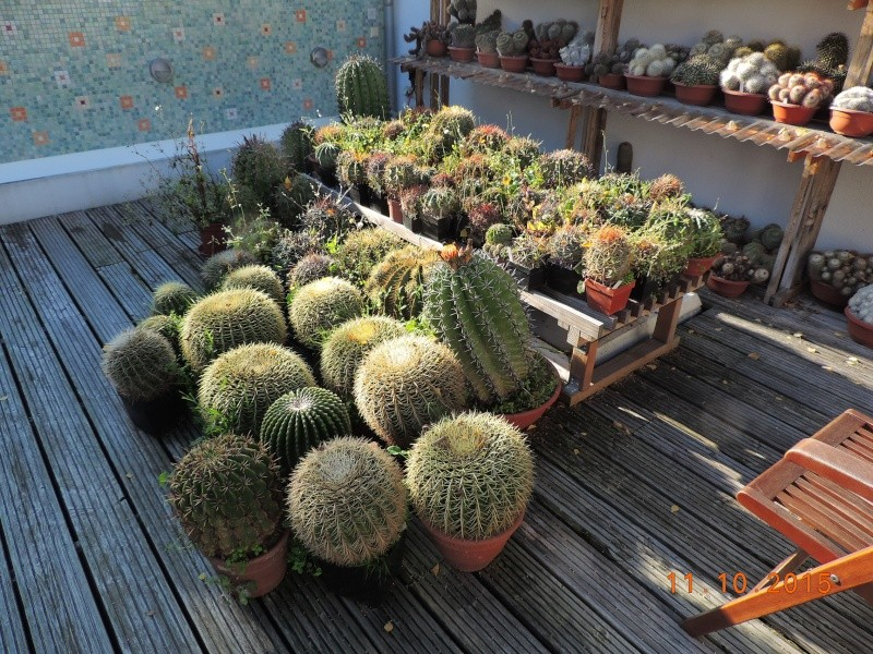 Cacti and Sukkulent in Köln, every day new flowers in the greenhouse Part 136 Bild_192