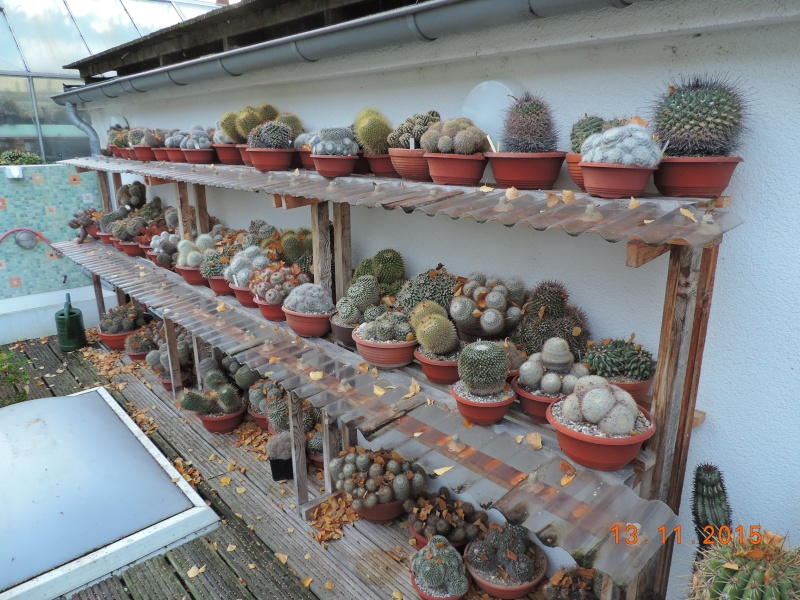Cacti and Sukkulent in Köln, every day new flowers in the greenhouse Part 137 Bild_219