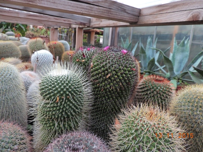 Cacti and Sukkulent in Köln, every day new flowers in the greenhouse Part 137 Bild_225