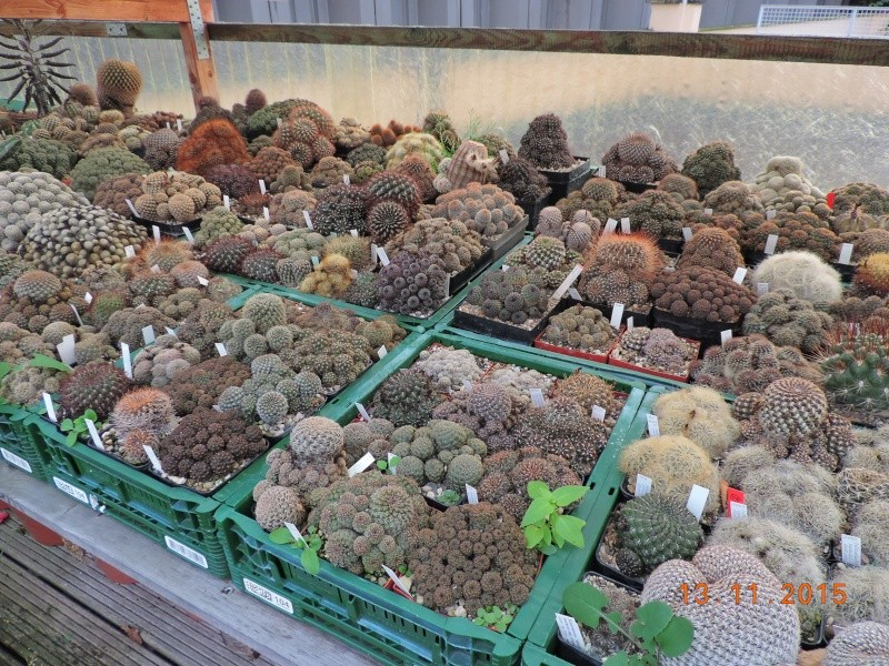 Cacti and Sukkulent in Köln, every day new flowers in the greenhouse Part 137 Bild_244