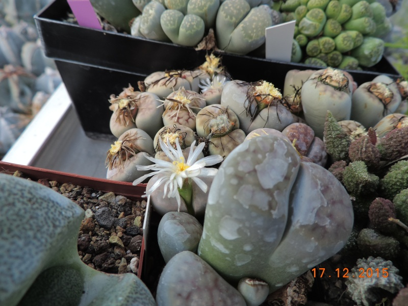 Cacti and Sukkulent in Köln, every day new flowers in the greenhouse Part 137 Bild_254